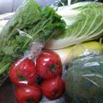 げんきの郷 野菜